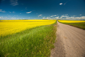 Grid by a canola field Photo credit: Ryan Goolevitch
